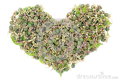 Green unripe blackberries heart concept
