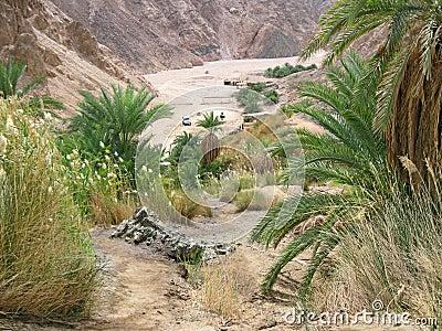 Green valley on Sinai.