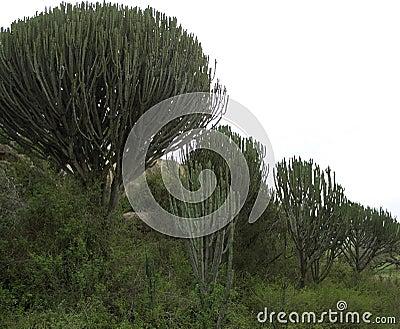 Green vegetation near Ngorogoro Crater in Africa