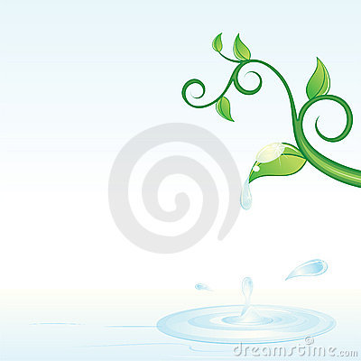 Green vine and water