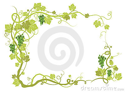 Green vineyard frame