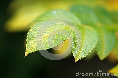 Green vivid leaf with copyspace