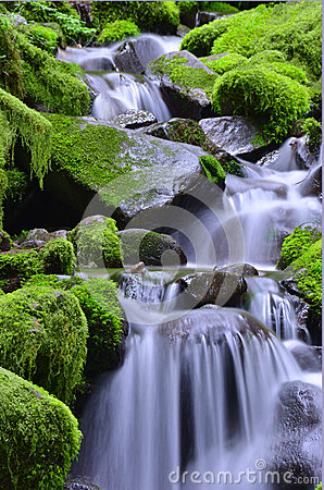 Free Green Waterfalls Royalty Free Stock Photography - 70748107