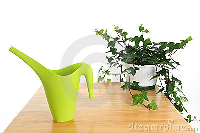 Green watering can and ivy in pot