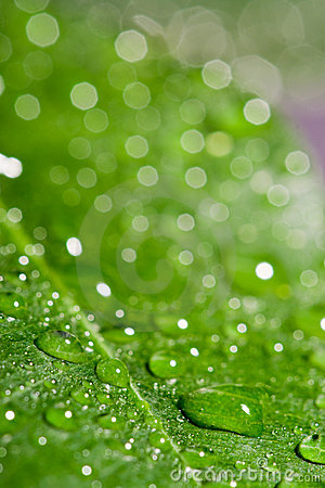 Green wet leaf