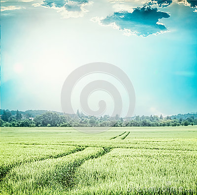 Free Green Wheat Field , At Blue Sky . Rural Agriculture Or Farming Landscape With Traces Of Tractor Royalty Free Stock Photography - 94166577
