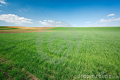 Green Wheat Field And Blue Sky Royalty Free Stock Photography - Image: 14070317