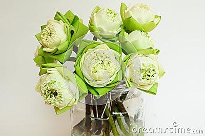 Green white lotus flower