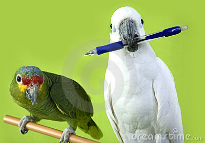 Green and white parrots