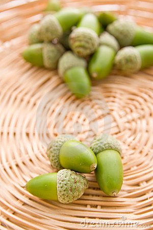 Green whole acorns