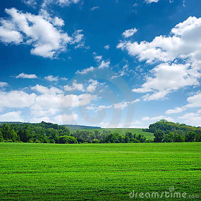 Green wide field with trees on horizon