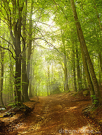 Green and wild nature, forest in Catalonia (Spain)