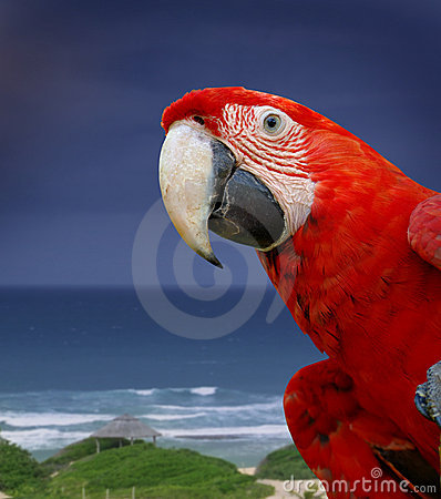 Free Green Wing Macaw Parrot Stock Photos - 3910533