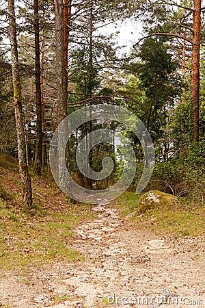 Free Green Woods Path Stock Photos - 36915933