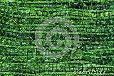 Green Woven Straw