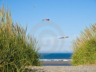 Green and Yellow Beach Grass with Kites