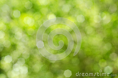 Green and Yellow Bokeh