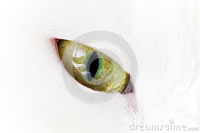 Green yellow cat eye