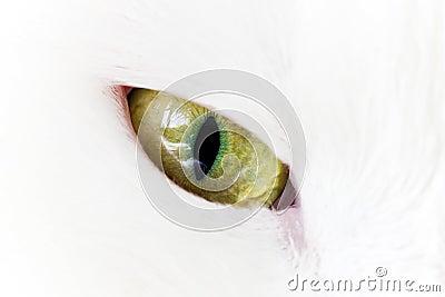 Green yellow cat eye