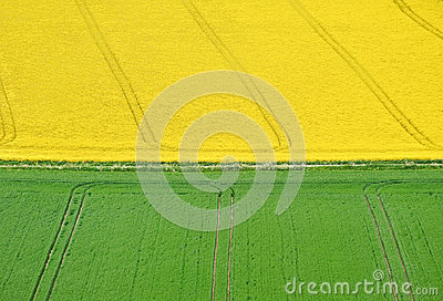 Green and yellow fields landscape