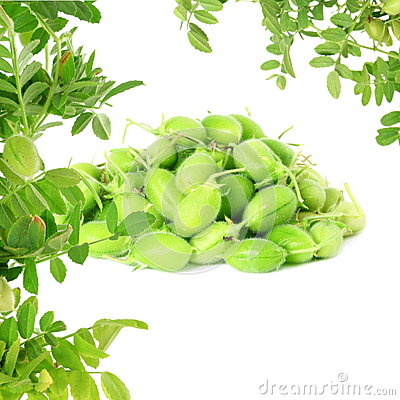 Free Green Young Chickpeas Pod With Plant  On Pure White Background Royalty Free Stock Photography - 57289107