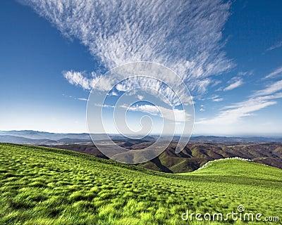 Greenery and blue sky