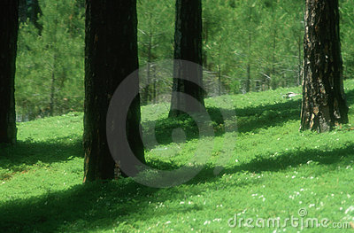 Greenery on forest floor