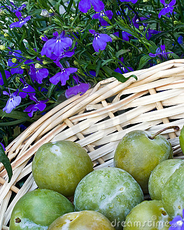 background of greengages
