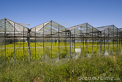 Greenhouse with crops