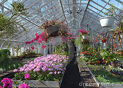 Greenhouse for  flowers