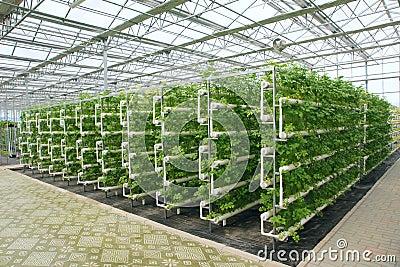 Greenhouse Stock Photo Image 45850132