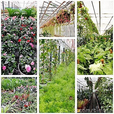 Greenhouse interior collage