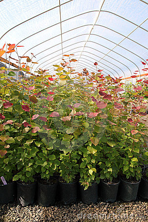 Free Greenhouse Plant Nursery, OR. Stock Photography - 20263872