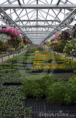 Greenhouse Plants and Flowers For Sale