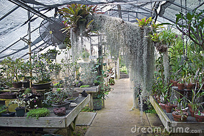 Greenhouse View