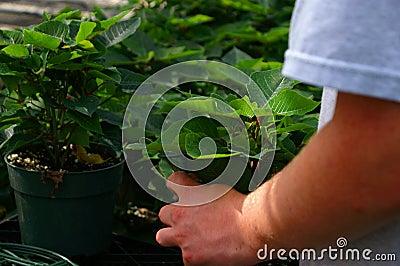Greenhouse Worker 2