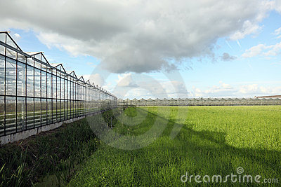Greenhouses under blue sky and white clouds