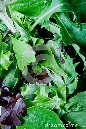 Free Greens Stock Photo - 3927530