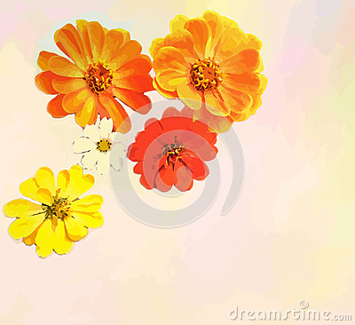 Greeting card with bouquet of zinnia