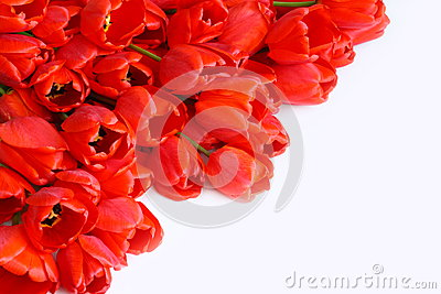 Greeting Card with Flowers (red tulips) Stock Photo