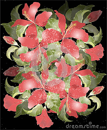 Greeting card with hibiscus.