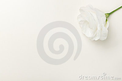 Greeting card with white rose