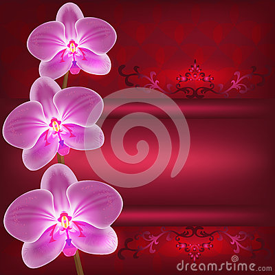 Greeting or invitation card with orchid flower, ve