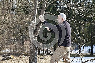 Mi sawing g de jardinier d 39 homme arbre fruitier de - Coupe des arbres fruitiers ...