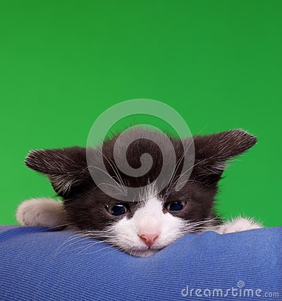 Gremlin Cat Cut Out