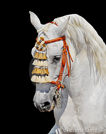 Grey andalusian horse spanish decoration