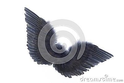 Grey angel wings