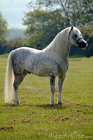 Grey beauty - horse