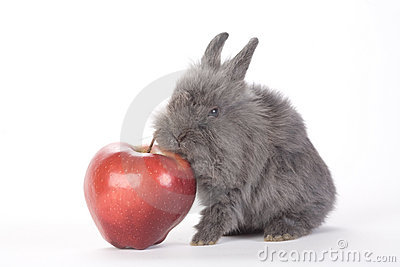Grey bunny and an red apple, isolated