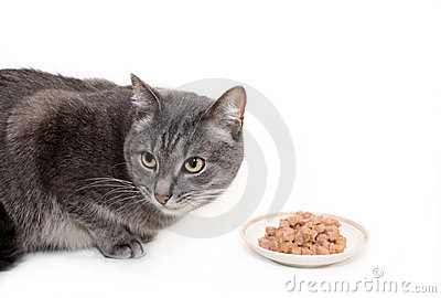 The grey cat eats the cat s canned food